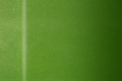 piaggio-971-Verde-Acido-Mic-2ct